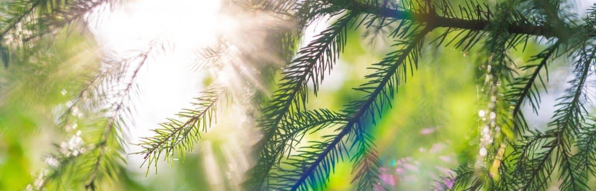 Light LIGHT Highlights Issue 1